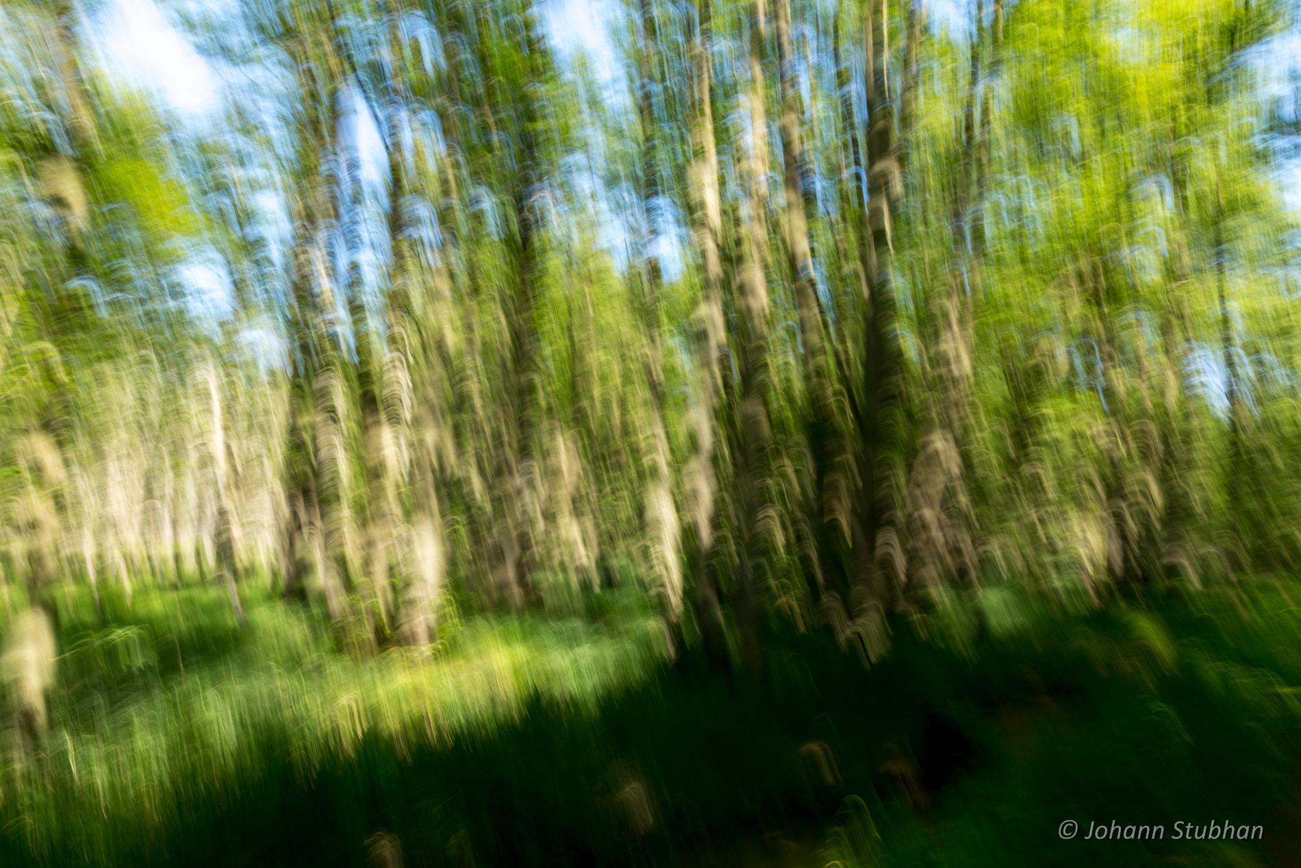 Wald-Schwung