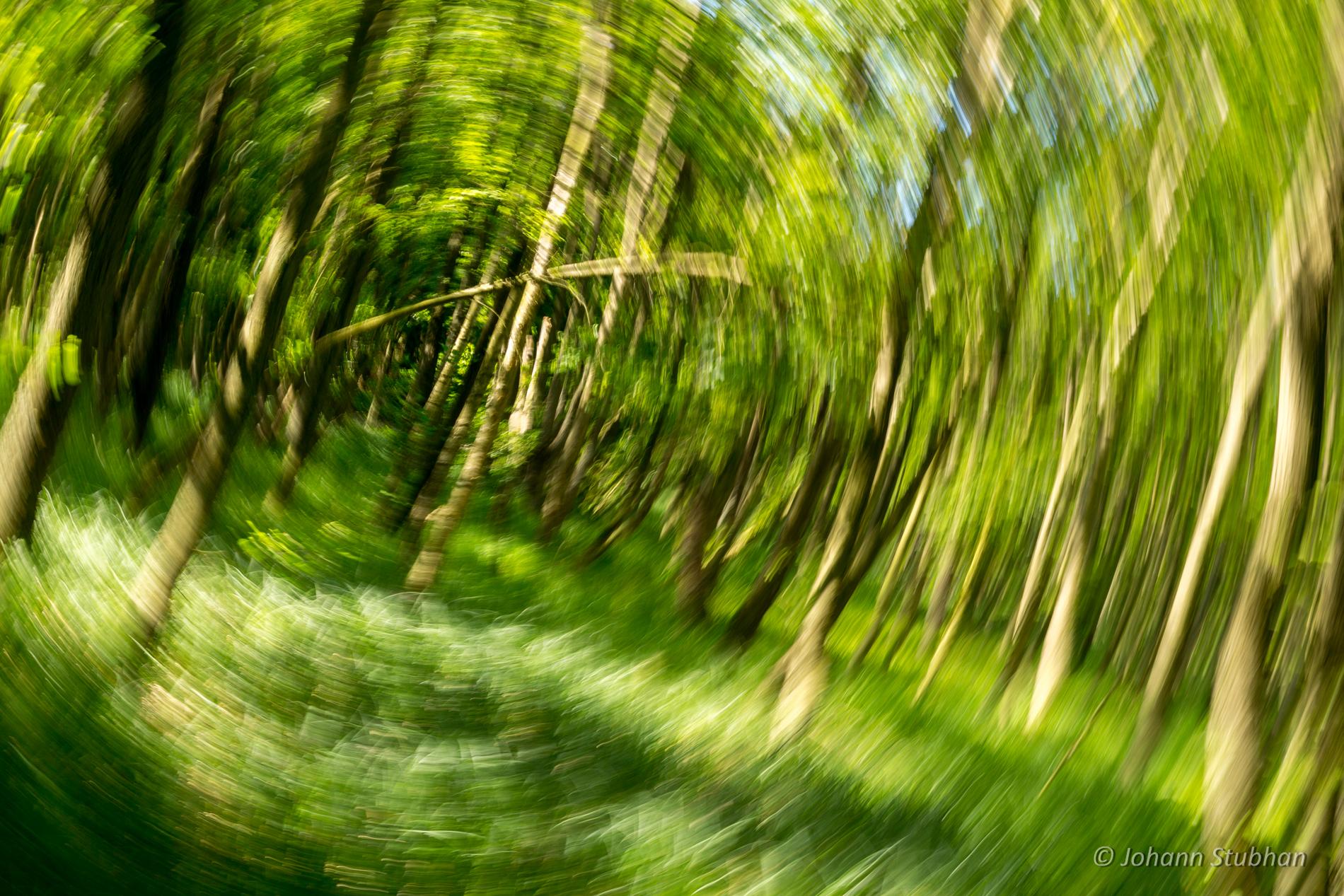 Es geht rund im Wald